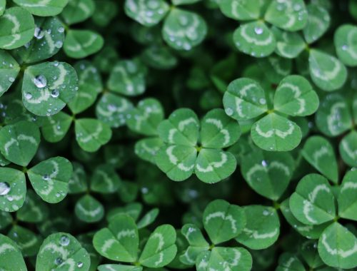 7 Tips for Staying Sober on St. Patrick's Day